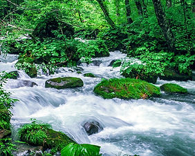 Mountain stream in Oirase Gorge in Japan