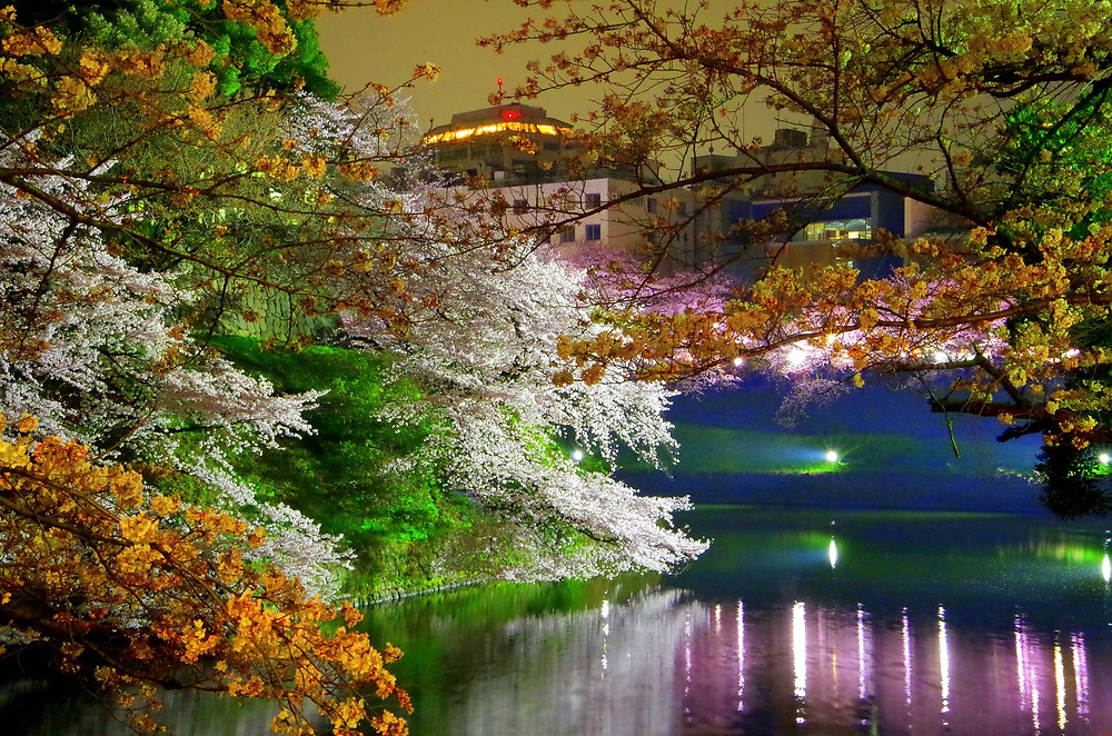 Chidorigafuchi in Tokyo (Spring Sakura Tour 2018)