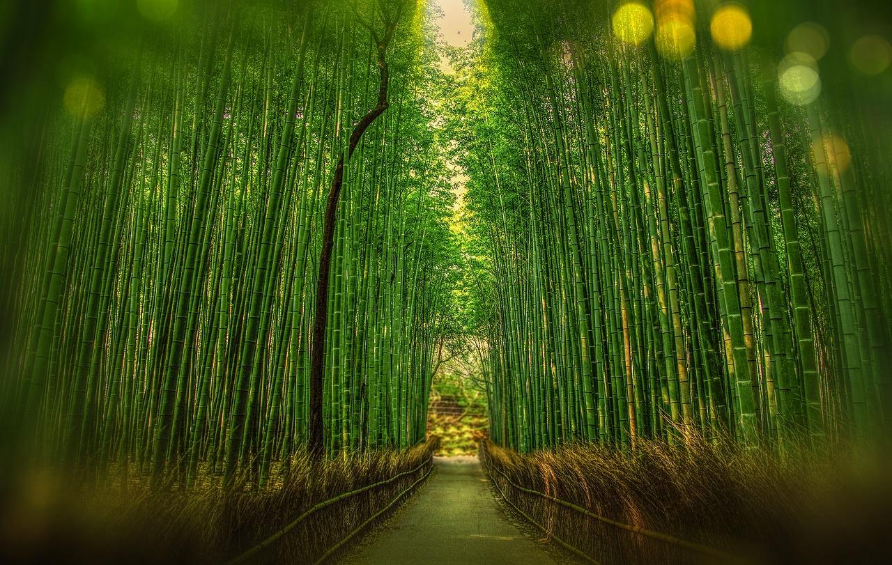 The world famous bamboo grove in Arashiyama, Kyoto, Japan