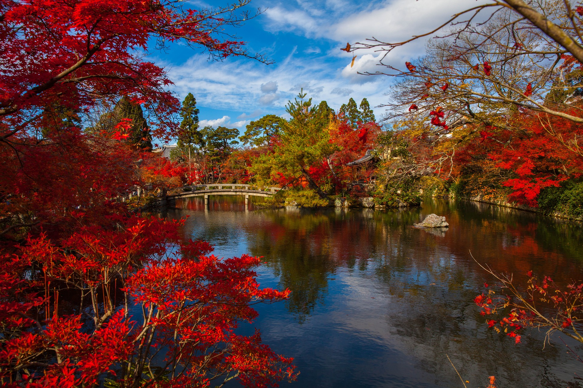 Beautiful autumn foliage at a Japanese garden in Kyoto, Japan