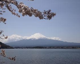 View of Mt. Fuji and cherry blossoms at Lake Kawaguchi, Japan