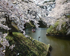 Hirosaki Castle moat with cherry blossoms in full bloom
