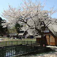 The UNESCO World Heritage listed Gokayama Village in the middle of spring