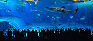 Churaumi aquarium in Okinawa, Japan during our Island Hopper small group tour of Japan.