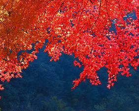 Autumn leaves on Mt Takao in Tokyo, Japan