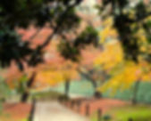 Autumn leaves in Shinjuku Gyoen Garden in Tokyo, Japan