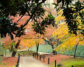 Autumn leaves in the Shinjuku Gyoen Garden in Tokyo, Japan
