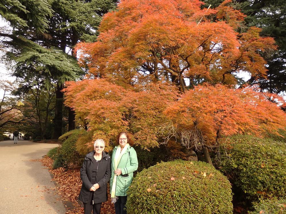 Shinjuku National Garden in Tokyo