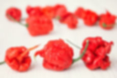 Super hot pepper carolina reaper.jpg