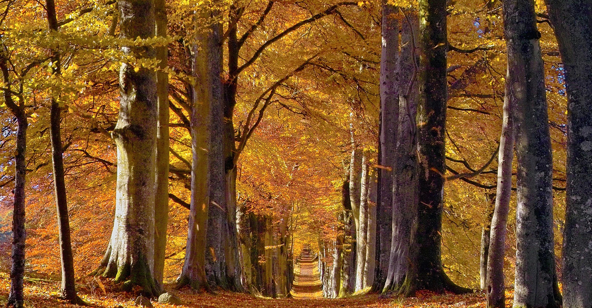 Perthshire Forests in Autumn