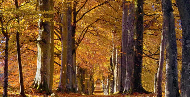 scotland Forests in Autumn with red leaves and road through trees