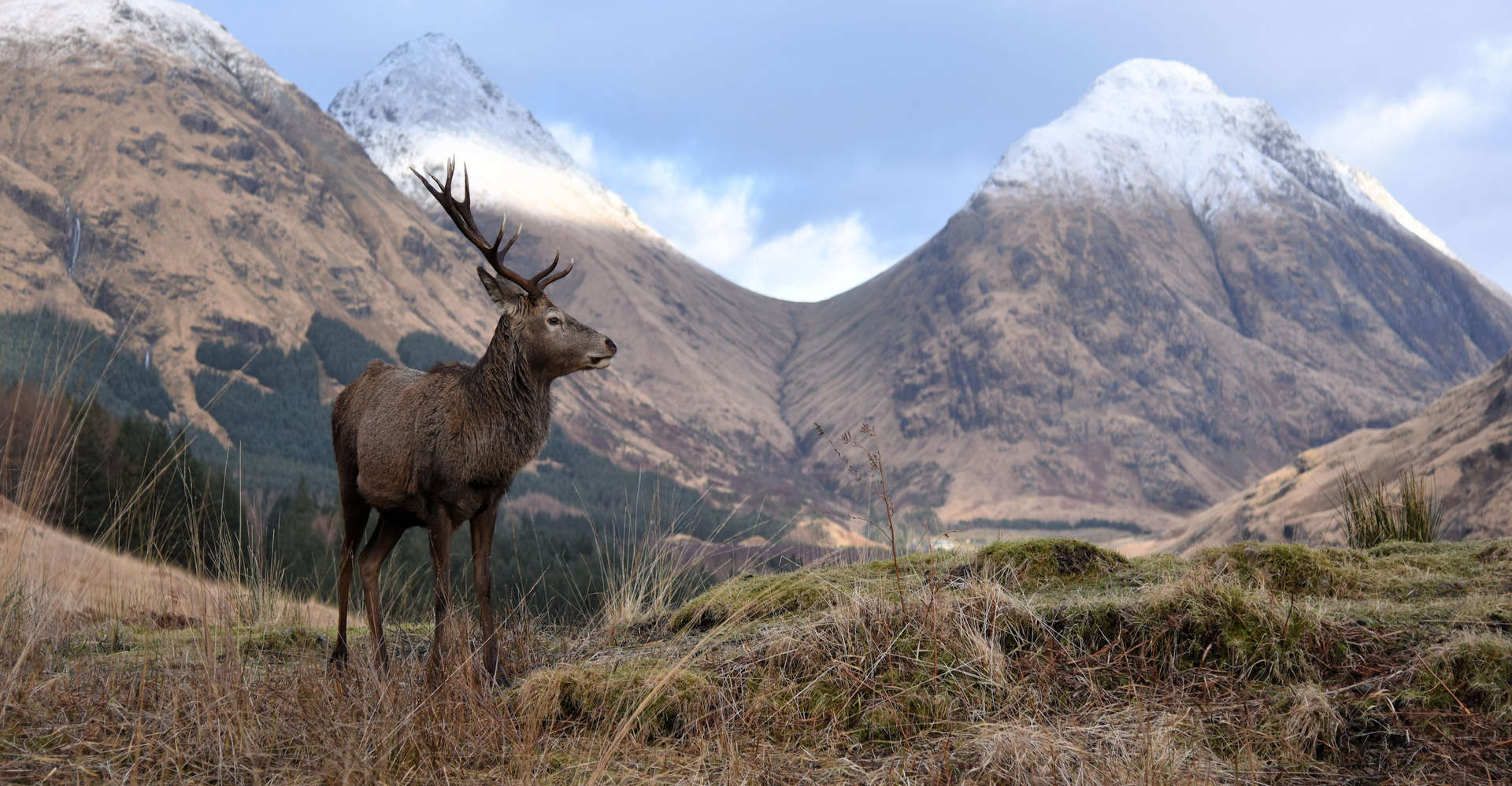 deer in snowy glencoe scotland seen on private tour with scotlux