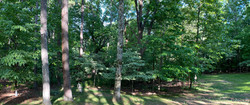 Woods with Anamorphic lens