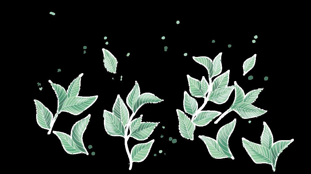 Teeblätter2.png