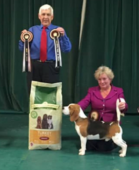 Res Best in Show @ Beagle Ass