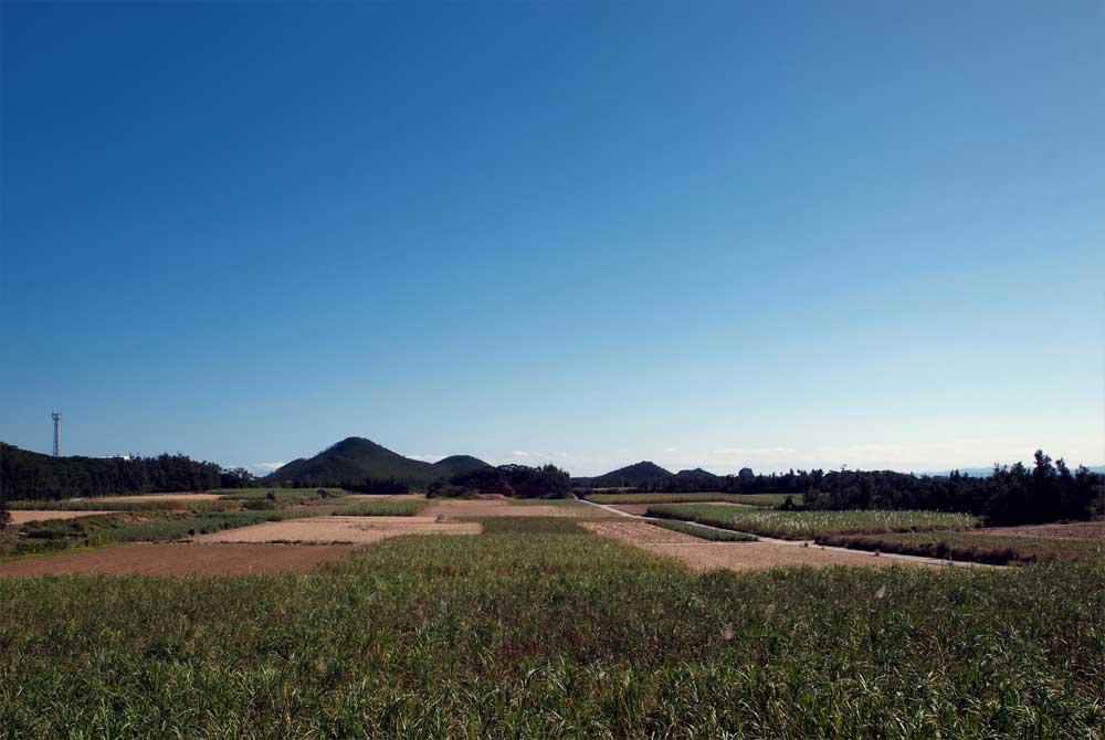 キビ畑の景観