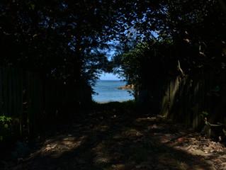 木々のトンネルの向こうに海