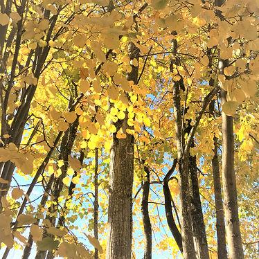 feuilles%20_edited.jpg