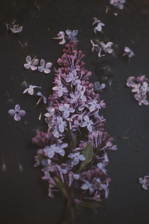 Garden Study Lilac 1