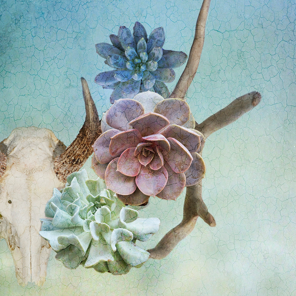 Stag and The Succulant