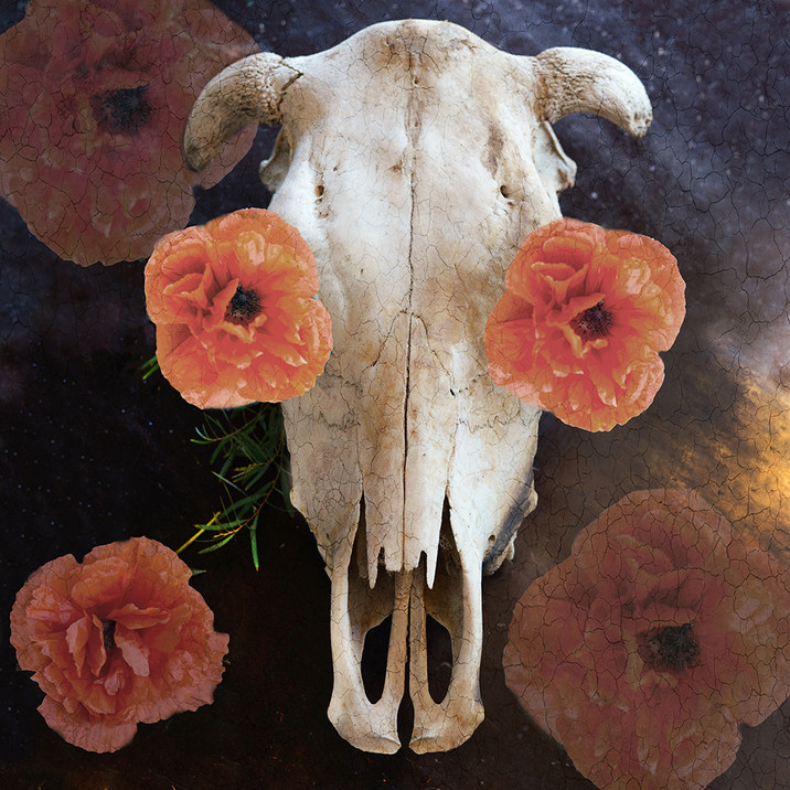 Bull and the Poppies