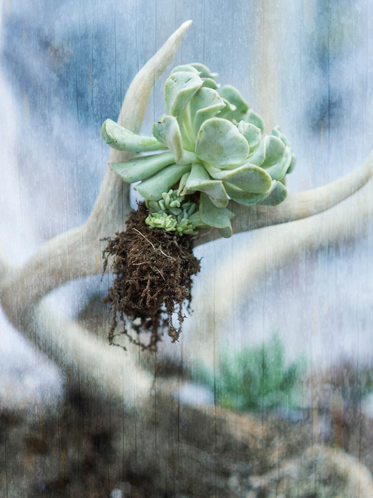Rooted 1