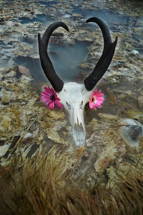 Antelope over Lithia Springs
