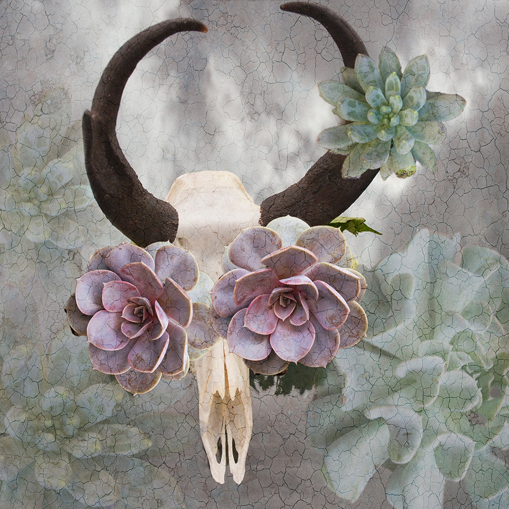 antelope and the succulant