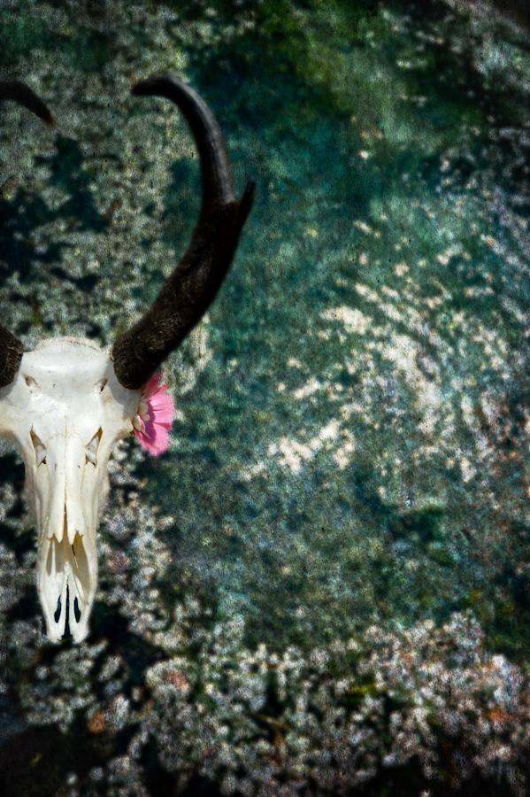 Antelope/ Steamboat Springs