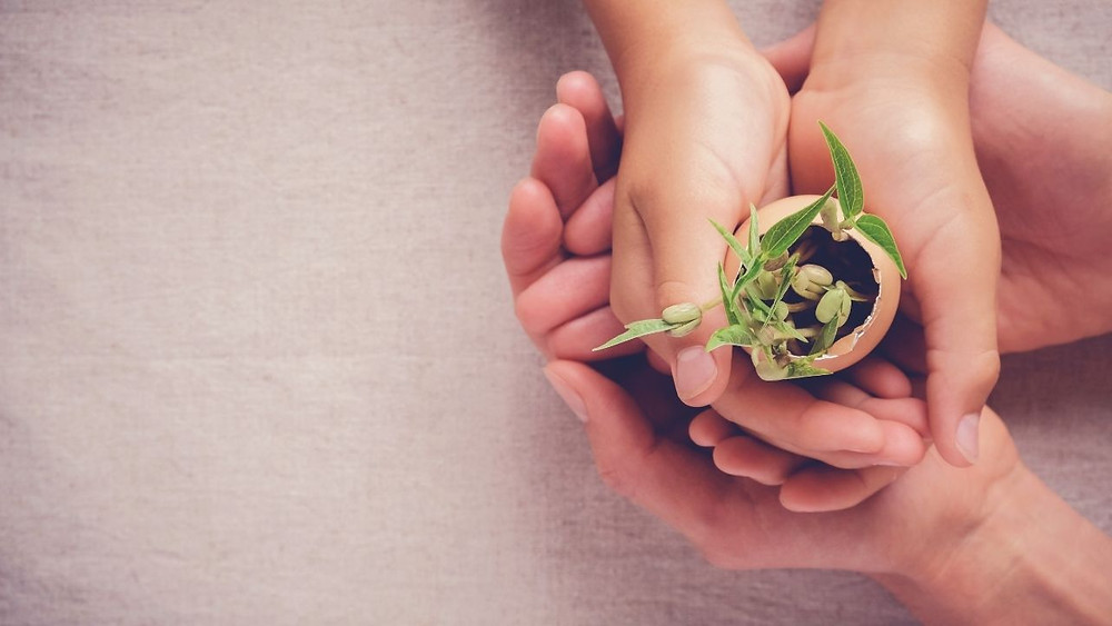hands holding a plant caring