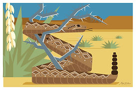 Diamondback Rattlesnake.jpg
