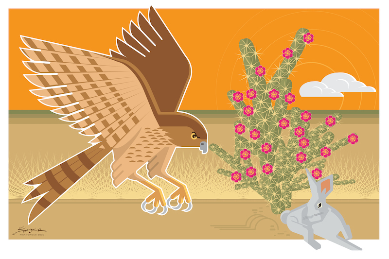 Coopers Hawk and rabbit