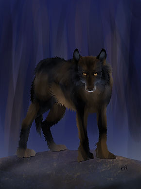 Night wolf.jpg
