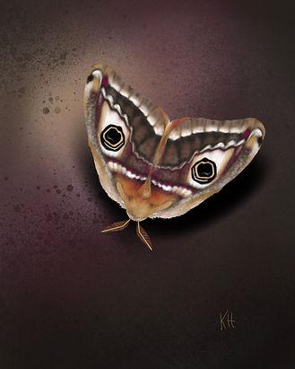 Moth eyes.jpg