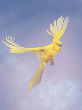 Canary.JPG