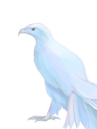 White raptor.jpg