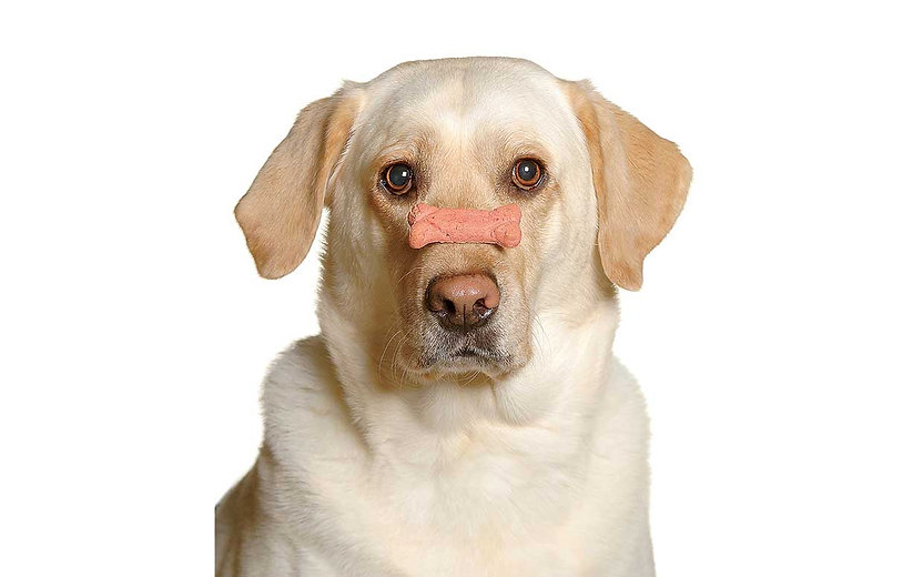 03-30-14-dog-treats-ftr.jpg