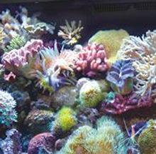 red-sea-max-aquarium.jpg