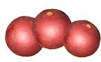 camu_fruto_etiqueta.png