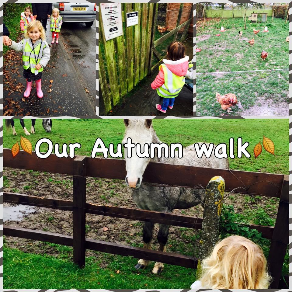 Autumn walk, meeting the animals