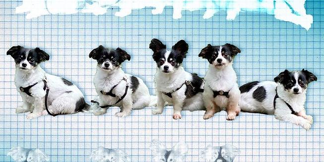 pop-pet-cloning-lede-1607701834.jpg