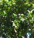 Orígenes de la citricultura en Dzán, Yucatán (1/3)