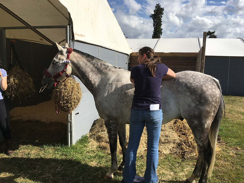 Kate treating Chip before pre-ride vetting. Note we got a good end stable position so good ventilation and airflow.