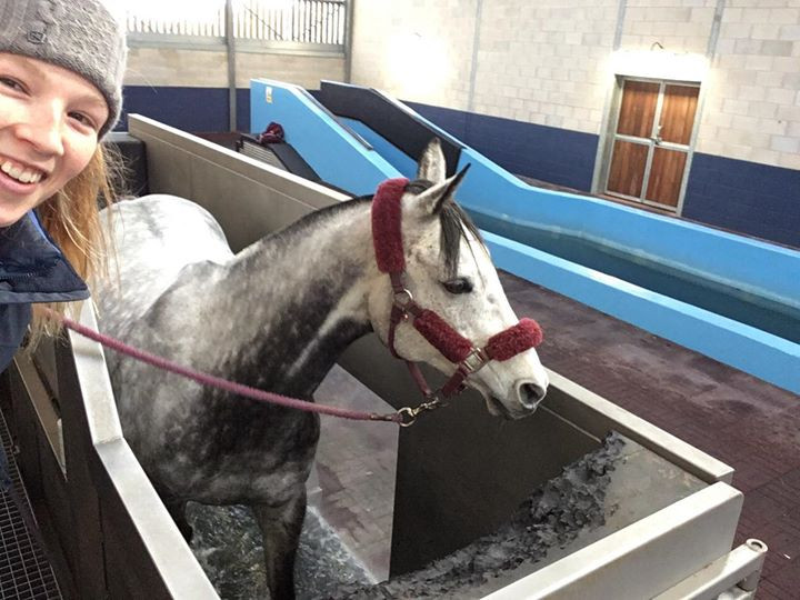Equine Water Treadmill