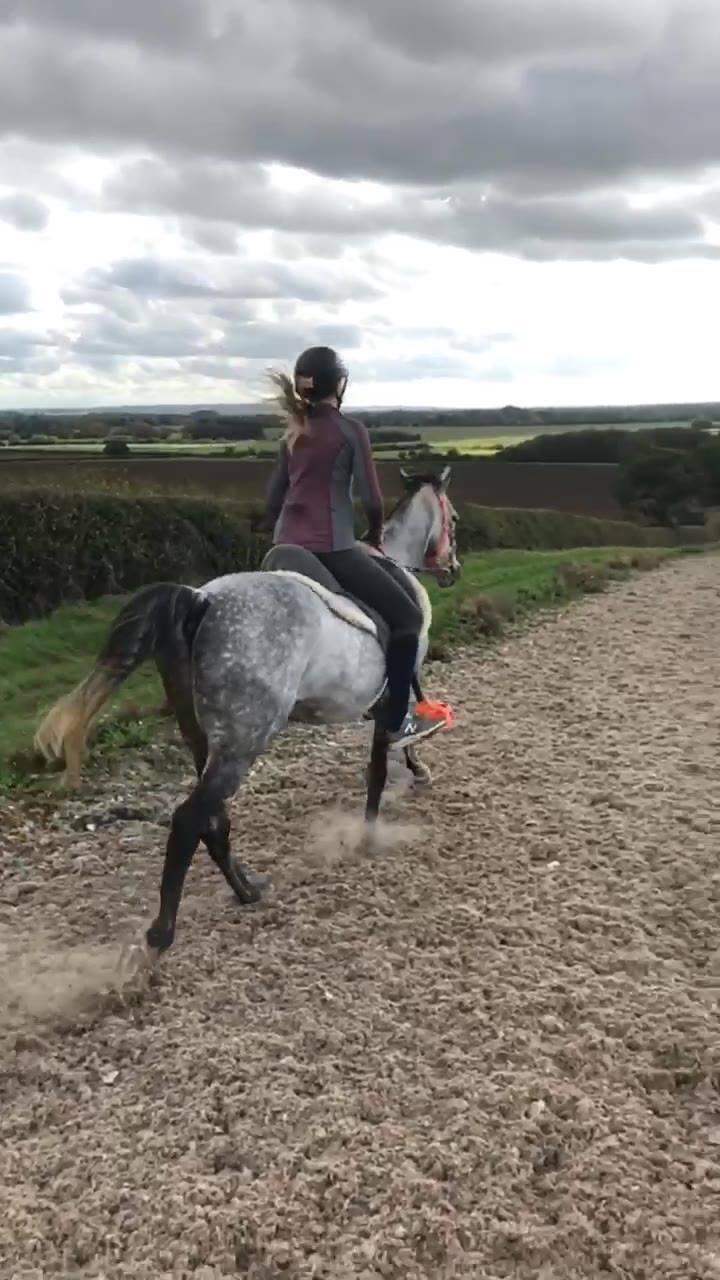 Gallops training with Chippy on Sunday as his final prep for his 1* on the 7th!!