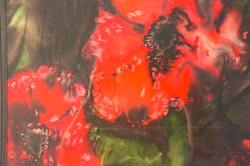 Art show large poppy 1