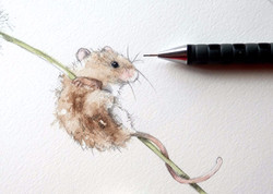 watercolour of a mouse