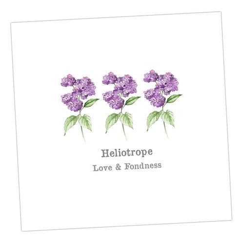 Heliotrope Card