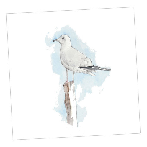 Seagull Blank Card