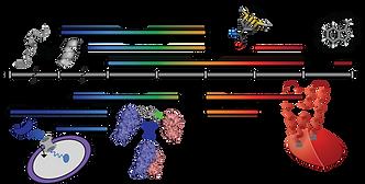 Figure1_DynamicsTimeline.png